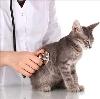 Ветеринарные клиники в Корсакове